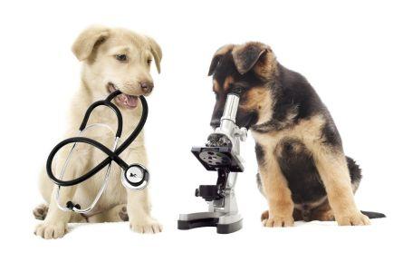 Uw kat of hond vaccineren of toch eerst serologisch testen?
